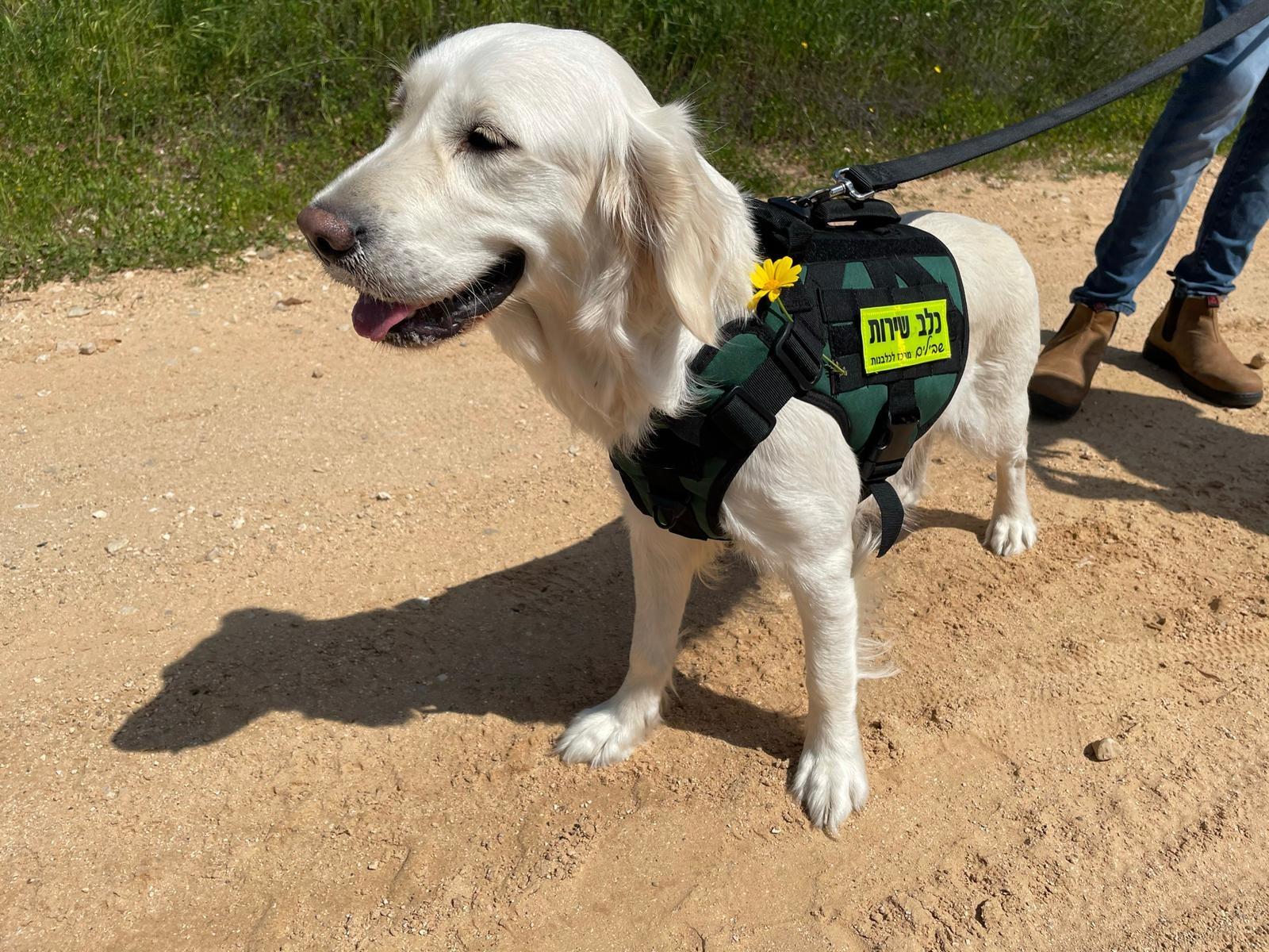 כלב שירות בעבודה